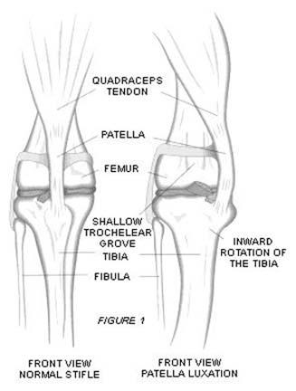 Подвывих коленного сустава собаки как вылечить хронические боли в мышцах и суставах